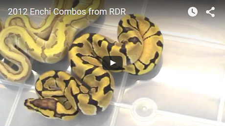 2012 Enchi combos from RDR