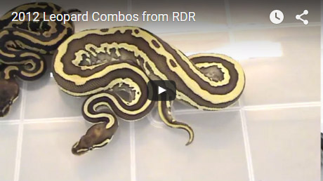 2012 Leopard combos from RDR